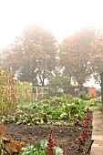 AUTUMN ALLOTMENT SCENE