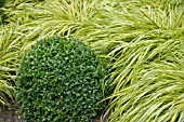 BUXUS BALL IN FRONT OF HAKONECHLOA MACRA AUREA