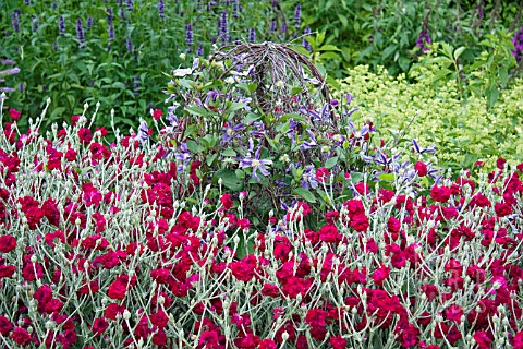 LYCHNIS_CORONARIA_GARDENERS_WORLD_BLYCH_WITH_CLEMATIS
