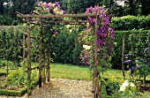 CLEMATIS JACKMANII AND ROSA GOLDEN SHOWERS ON PERGOLA. MANSION, CASTLE  OF TOUFFOU (86).