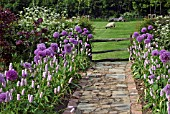 CRAZY PAVING PATH WITH PURPLE BORDERS
