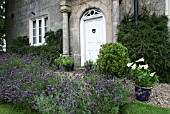 LAVANDULA EDGING IN FRONT OF HOUSE (MANOR HOUSE,  EVEDON)