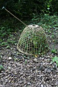 WICKER CLOCHE PROTECTION FOR NEW SHRUB
