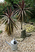 CORDYLINE AUSTRALIS ATROPURPUREA IN GRAVEL(KEXBY HOUSE,  LINCOLN)