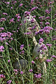 VERBENA BONARIENSIS WITH CARVED WOODEN MUSHROOMS (KEXBY HOUSE,  LINCOLN)