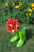 DAHLIA IN BOOTS