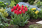 TULIPA BRILLIANT STAR