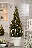 PICEA GLAUCA CONICA- AS CHRISTMAS TREE WITH DECORATIONS (WHITE THEME)