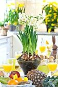 BREAKFAST TABLE WITH NARCISSUS AT EASTER