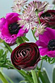 SPRING BOUQUET OF ASTRANTIA, ANEMONE AND RANUNCULUS