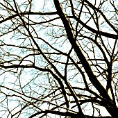 BARE WINTER BRANCHES, ART.