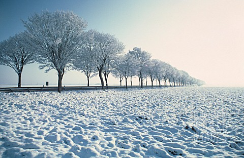 AVENUE_OF_TREES_IN__WINTER