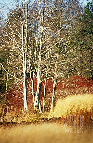 WINTER__WOODLAND_COLOUR