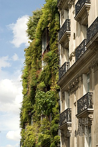 GREEN_LIVING_WALL_OF_BUILDING