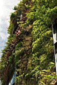 GREEN (LIVING) WALL OF BUILDING