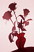 ROSES IN A VASE IN SILHOUETTE AGAINST A PINK WALL