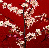 PRUNUS, CHERRY