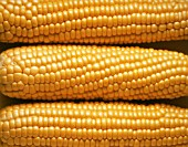 ZEA MAYS, SWEETCORN