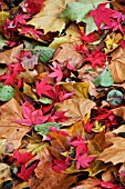 MIXED AUTUMN LEAVES