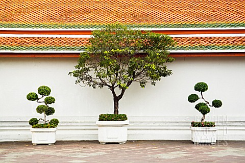 ORNAMENTAL_TREES_IN_CONTAINERS