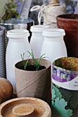 SEEDLINGS IN RECYCLED TOILET ROLL; RECYCLED CONTAINERS