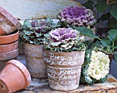 TERRACOTTA POTS WITH ORNAMENTAL CABBAGES