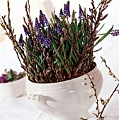 MUSCARI ARMENICUM AND WILLOW TWIGS