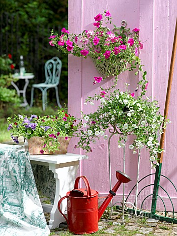 PETUNIAS_IN_A_HANGING_BASKET