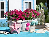 POTTED PHLOX DECORATED WITH STARFISH