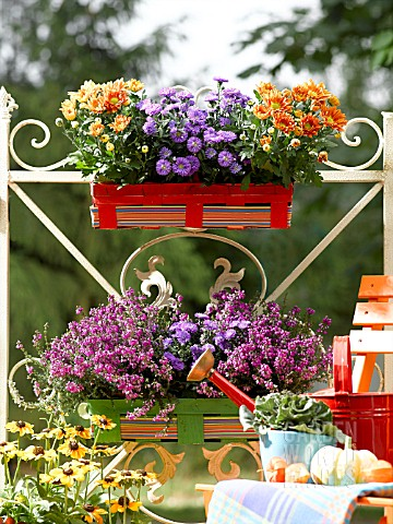 AUTUMNAL_FLOWERS_IN_A_WOODEN_BOXES