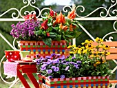COLORFUL AUTUMNAL FLOWERS IN PLAITED FLOWER BOXES