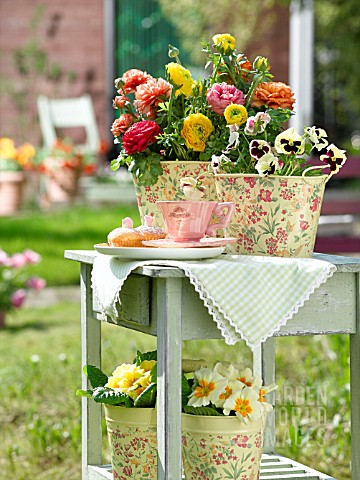 RANUNCULUS_AND_PANSIES_ON_GARDEN_TABLE