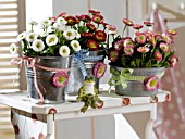 BELLIS PERENNIS DECORATED CONTAINERS
