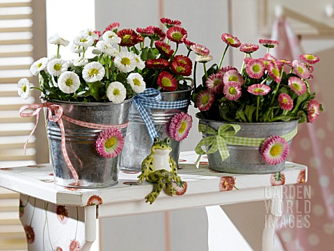 BELLIS_PERENNIS_DECORATED_CONTAINERS