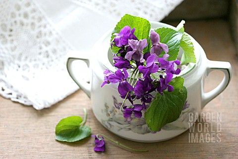 SPRIG_OF_VIOLETS_IN_A_SUGAR_POT