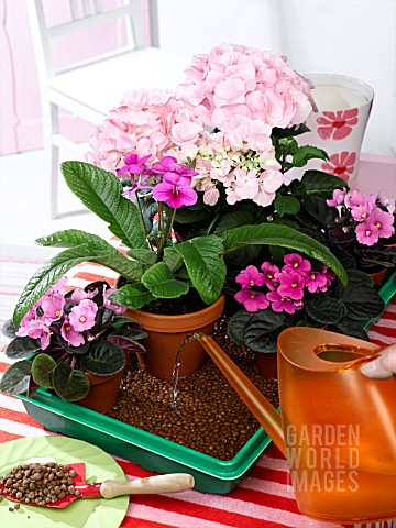 OVER_THE_WEEKEND_HOUSEPLANTS_IN_SMALL_TRAY_WITH_WET_EXPANDED_CLAY_GRANULES