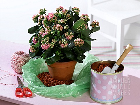 HOLIDAY_WATERING_MOISTENED_CLAY_GRANULES_IN_A_PLASTIC_BAG_TIED_WITH_STRING