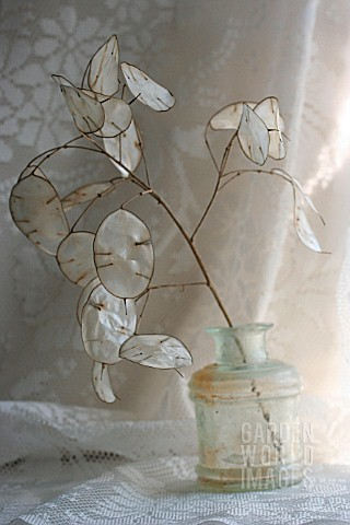 LUNARIA_IN_A_VINTAGE_GLASS_VASE