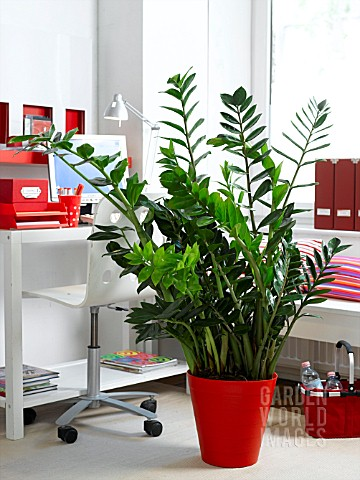 HOUSEPLANTS_IN_THE_OFFICE_ZAMIOCULCAS