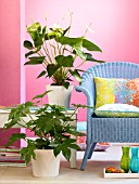 ANTHURIUM, ARALIA AND A BLUE CHAIR