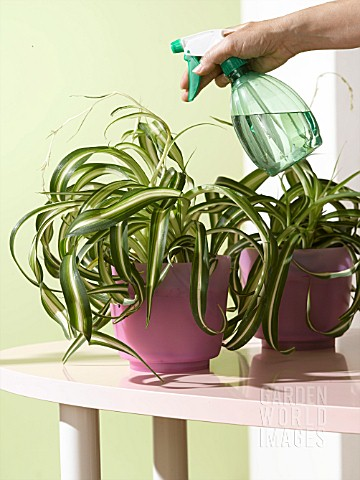 TAKING_CARE_OF_YOUR_PLANTS_SPRAYING