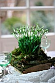 TABLE DECORATION WITH GALANTHUS
