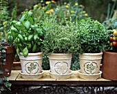 POTTED HERBS: BASIL, THYME AND LEMON BASIL