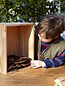INSECT HOUSE BUILDING PROJECT WITH FATHER AND SON.  CHILD PLACING BARK IN BOX.  STEP 6