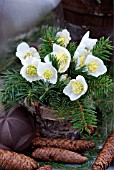 HELLEBORUS TABLE DECORATION