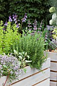 ROSMARINUS OFFICINALIS (ROSEMARY), THYMUS VULGARIS (THYME) AND SALVIA OFFICINALIS (SAGE), IN LARGE WOODEN CONTAINERS. THE SADOLIN FOUR SEASONS GARDEN, RHS HAMPTON COURT PALACE FLOWER SHOW. DESIGNER: HELEN WILLIAMS