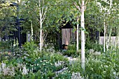 THE WHITE TRUNKS AND BARK OF BETULA UTILIS JACQUEMONTII  THE CANCER RESEARCH UK GARDEN DESIGNED BY ROBERT MYERS, RHS CHELSEA