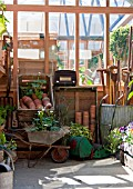 INSIDE GREENHOUSE WITH STRAWBERRIES IN BARROW, OLD TOOLS AND RADIO.