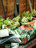 GROWBAG WITH LOLLO ROSSA LETTUCE