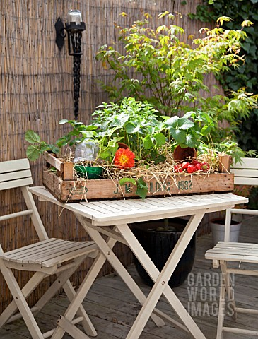 MINI_ALLOTMENT_CRATE_WITH_STRAWBERRIES_MINT_AND_CUCUMBER